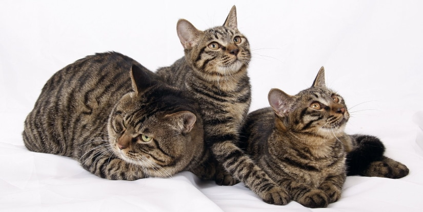 3 cats are waiting to be fed