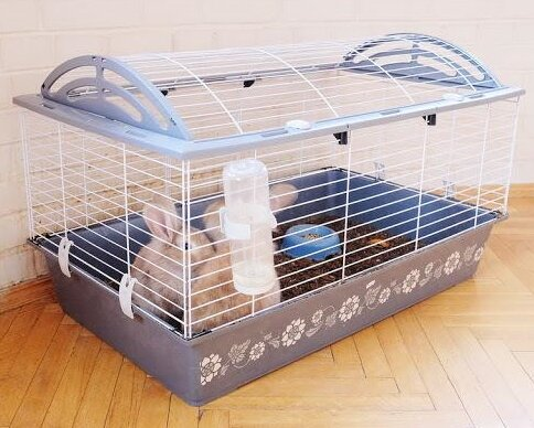 Few Rabbits In Cage