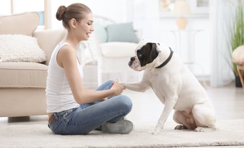 Girl having fun with a dog at home