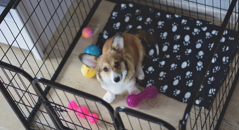 Puppy play in crate