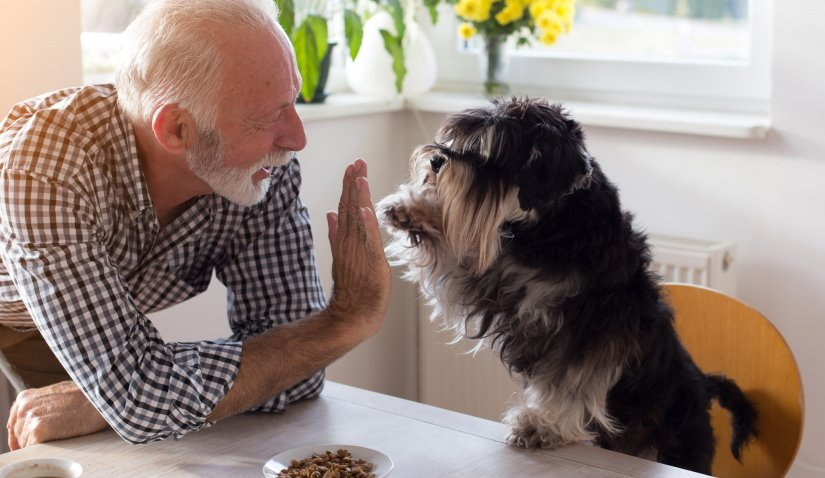 Dog giving five with paw