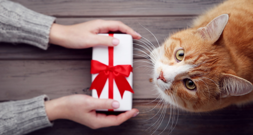 Ginger cat examines a gift box
