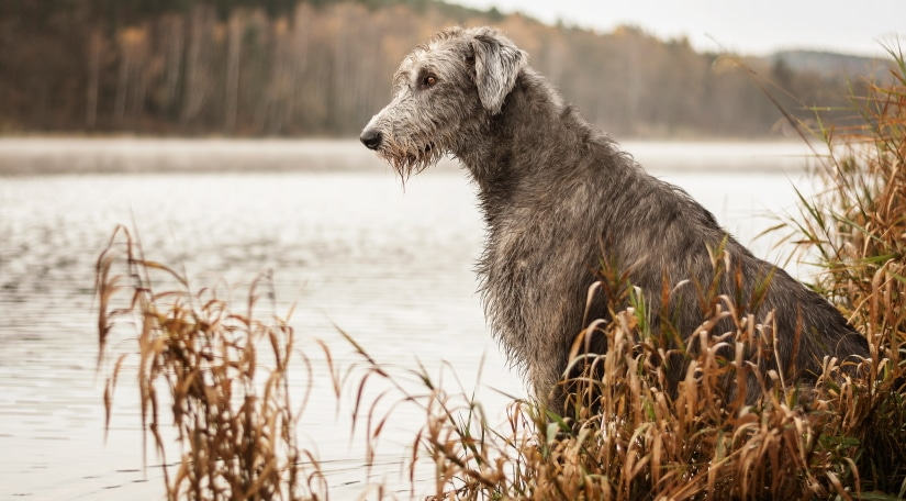 Dog by the river