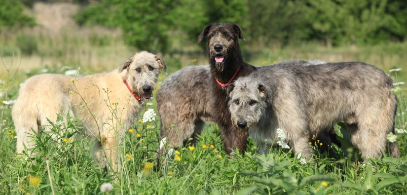 3 dogs of different colors