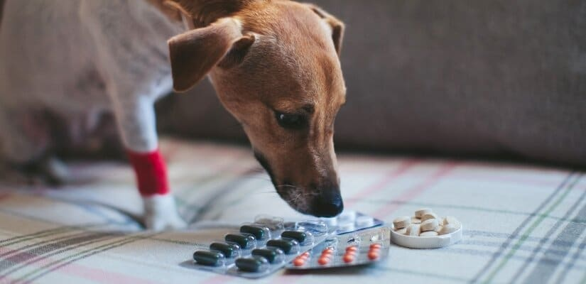 Dog and pills