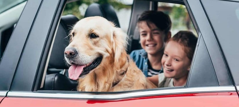 Traveling with dogs via car