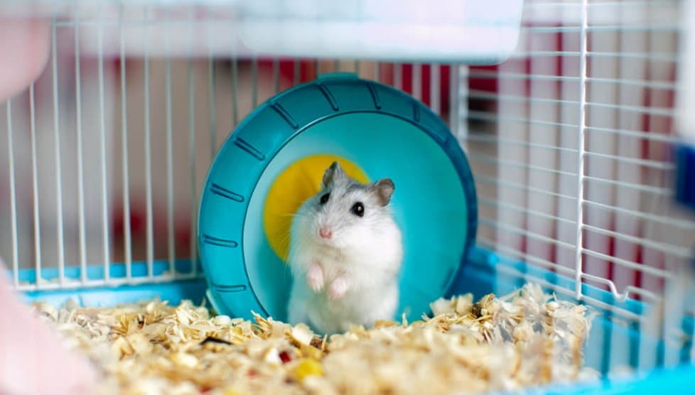 The Essentials Our 5 Best Hamster Cages Of 2020 Petonbed Reviews