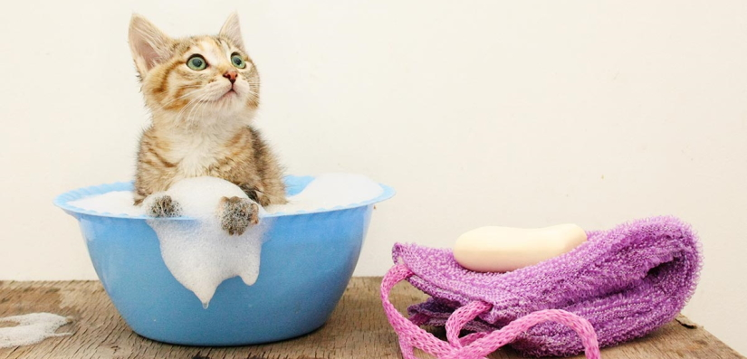 The kitty is washed in a basin