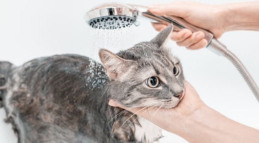Gently wash the body of the cat