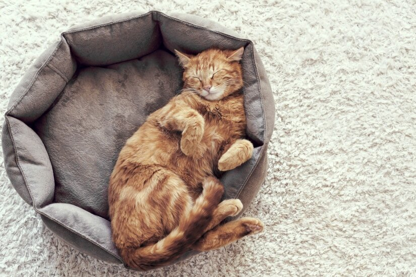Cats Beds