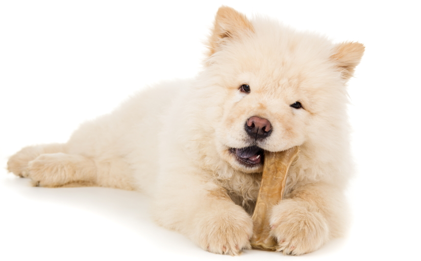 Puppy having a snack