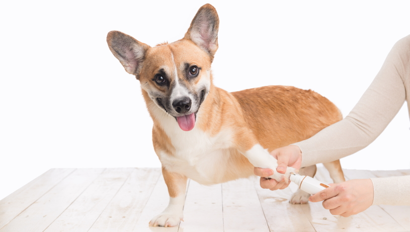 Trimming dog claws at home
