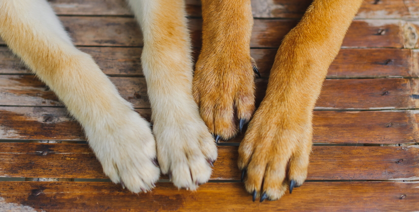 Well-groomed dog paws