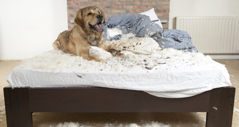 Dirty Dog in Bed