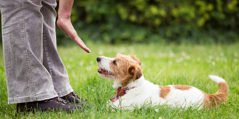 Pet obedience training