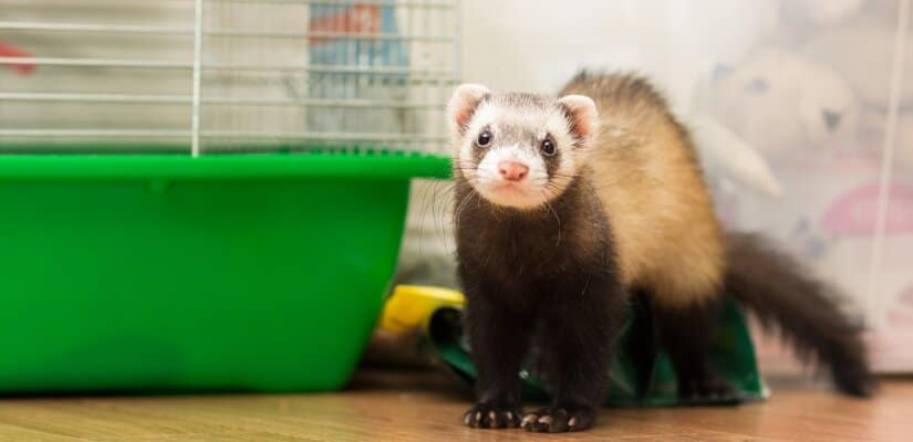 Ferret Cage of floor