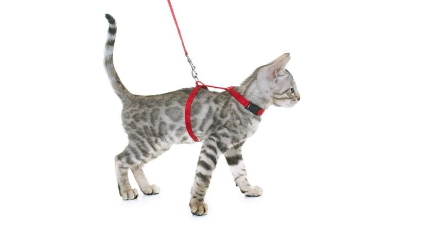 H-Style Cat Harness
