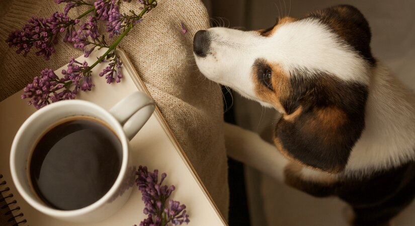 Dogs Try Drink Cofee