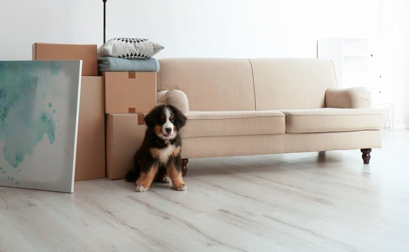 Dog in new home