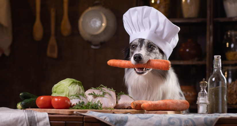 Dog in the kitchen with vegetables