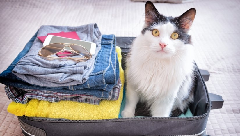 Cat waiting for a trip