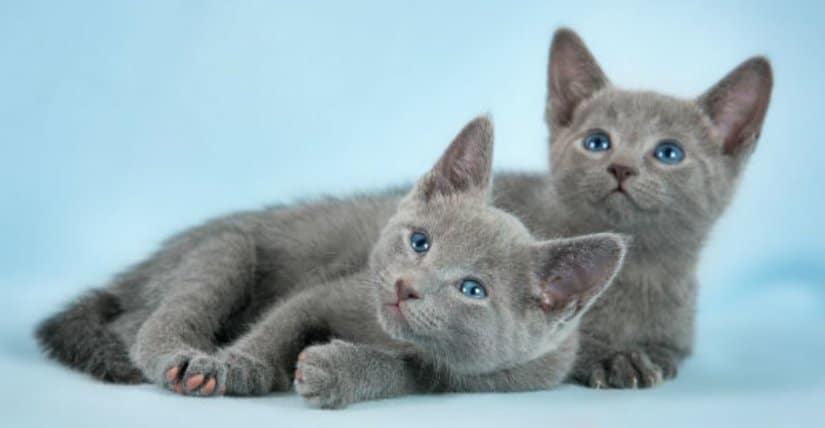 Two kittens